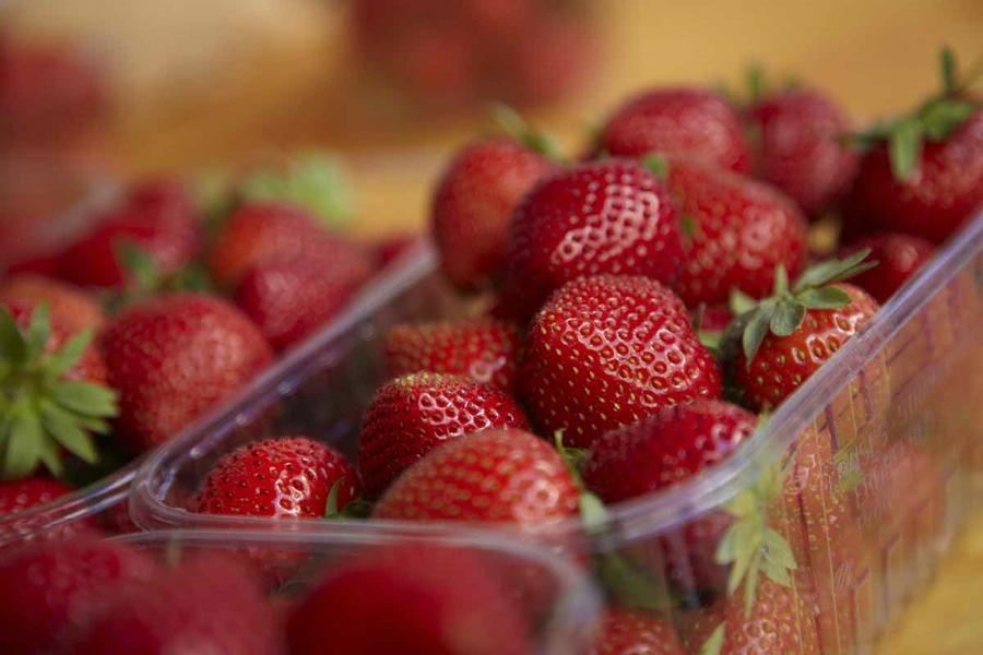 Leckere Périgord-Erdbeeren